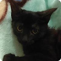 Adopt A Pet :: Holly - Gulfport, MS