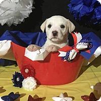 Adopt A Pet :: Bonnie - New Port Richey, FL