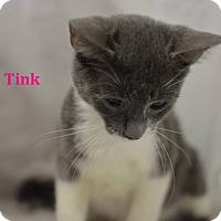 Adopt A Pet :: Tink - Miami Shores, FL