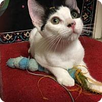 Adopt A Pet :: Trevor - Los Angeles, CA