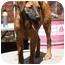 Photo 3 - Shepherd (Unknown Type) Mix Dog for adoption in kennebunkport, Maine - Merritt - Pending!