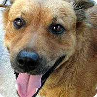 Adopt A Pet :: Roxie - Oakley, CA