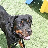 Adopt A Pet :: Camille - Seffner, FL