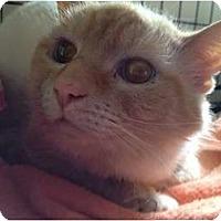 Adopt A Pet :: Win-da - Wenatchee, WA