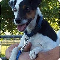 Adopt A Pet :: ROSIE - Phoenix, AZ