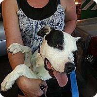 Adopt A Pet :: Harmony - Calgary, AB