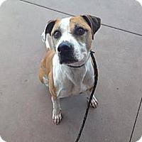 Adopt A Pet :: Kahuna - Calgary, AB