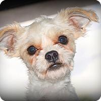 Adopt A Pet :: Link - Miami, FL