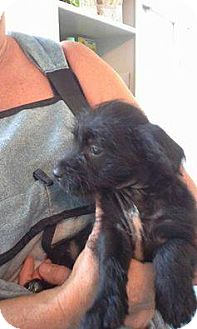 Terrier (Unknown Type, Small) Mix Puppy for adoption in Shallotte, North Carolina - Karina