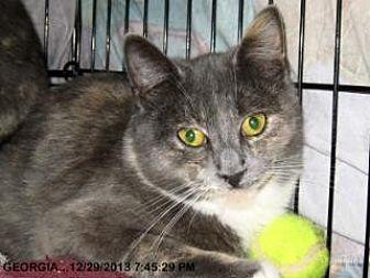 Domestic Shorthair Cat for adoption in Brainardsville, New York - Georgia