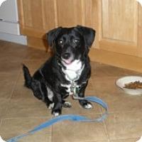 Adopt A Pet :: Minnie - Park Ridge, NJ