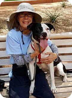 Staffordshire Bull Terrier/Pit Bull Terrier Mix Dog for adoption in Phoenix, Arizona - Emma