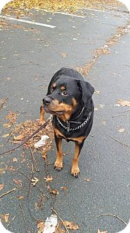 Rottweiler Mix Dog for adoption in Rexford, New York - Ruby