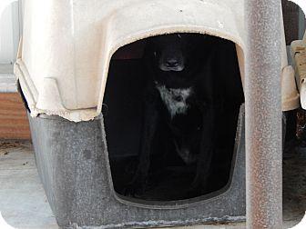 Labrador Retriever Mix Dog for adoption in Cuero, Texas - Wink