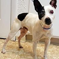 Adopt A Pet :: Jake - Bloomington, IL