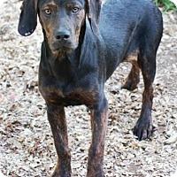 Adopt A Pet :: Jinx - Beacon, NY