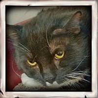 Adopt A Pet :: Fred (& Mustard) - Herndon, VA