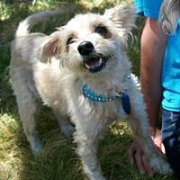 Adopt A Pet :: Cutie - Castro Valley, CA