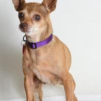 Adopt A Pet :: Kit Kat - Medford, OR