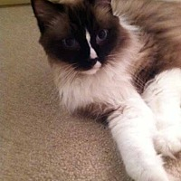 Adopt A Pet :: Zodiak - Greeley, CO