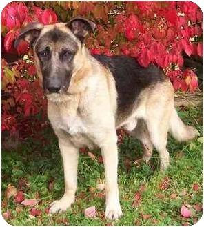 German Shepherd Dog Dog for adoption in Rochester/Buffalo, New York - Whiskey