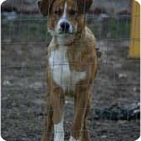 Adopt A Pet :: Buddy - New Boston, NH