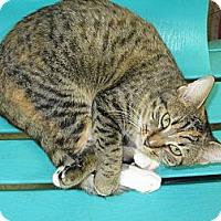 Adopt A Pet :: Andrea - Mobile, AL
