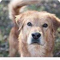Adopt A Pet :: Brady - Alexandria, VA