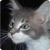 Adopt A Pet :: Hadley - Davis, CA