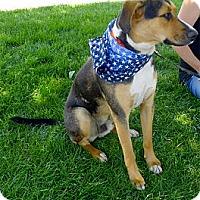 Adopt A Pet :: Ishi super companion - Sacramento, CA