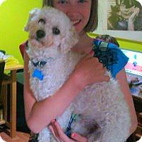 Adopt A Pet :: Punchi - Cornwall, ON