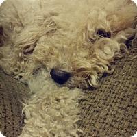 Adopt A Pet :: Daisy - Pflugerville, TX