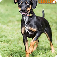 Adopt A Pet :: Cooper - in Maine - kennebunkport, ME
