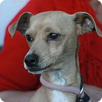 Adopt A Pet :: Tony - Canoga Park, CA