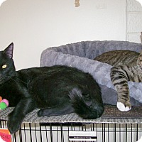 Adopt A Pet :: Kristof - Scottsdale, AZ