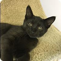 Adopt A Pet :: Alex - Medina, OH