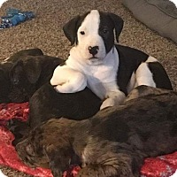 Adopt A Pet :: Sally - Broken Arrow, OK