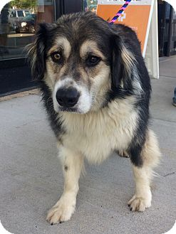 Golden Retriever Mix Dog for adoption in East Hartford, Connecticut - Bella in CT