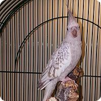 Adopt A Pet :: Jerri Garcia - Oceanside, CA