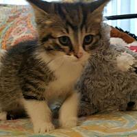 Adopt A Pet :: Duke - Zanesville, OH