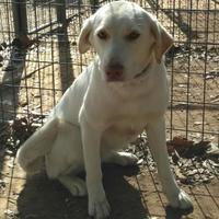 Adopt A Pet :: Mi Mi - Plano, TX