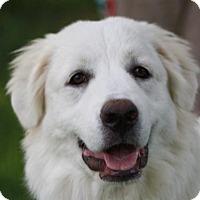 Adopt A Pet :: Nola - Staunton, VA