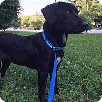 Adopt A Pet :: Joan - Youngsville, NC