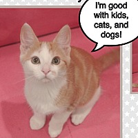 Adopt A Pet :: Wyatt - Orange, CA