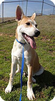 Carolina Dog Mix Puppy for adoption in Cranston, Rhode Island - Johnnie Rocket (located in GA)