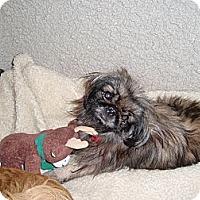 Adopt A Pet :: Gimmie - Richmond, VA