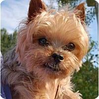 Adopt A Pet :: Lizzie - Charlotte, NC