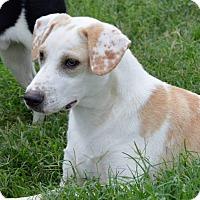 Adopt A Pet :: Howard - Bedminster, NJ