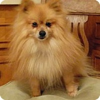 Adopt A Pet :: Archie - North Olmsted, OH