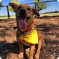 Adopt A Pet :: Rufio - San Antonio, TX
